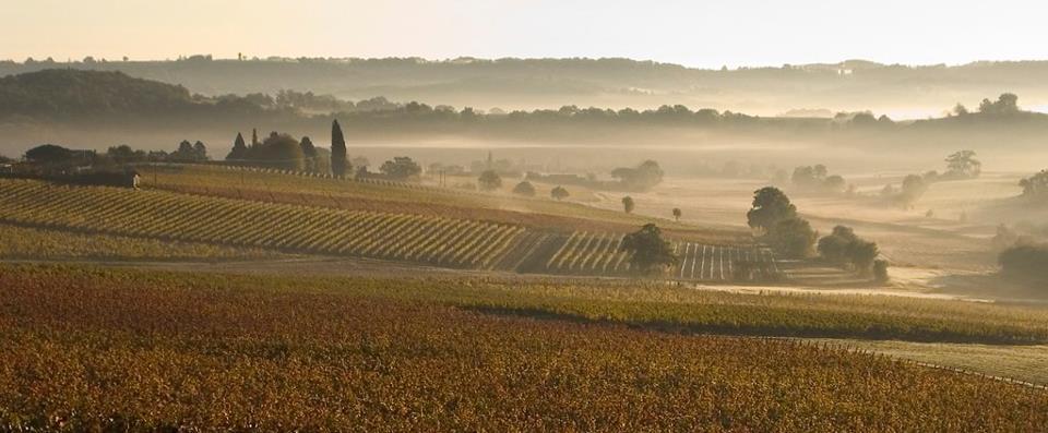 Vignoble du Château d'Aydie