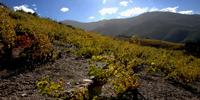 appel_Roussillon