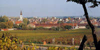 appell_Nuits_saint_georges
