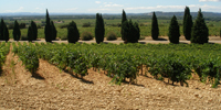 appell_chateauneufdupape