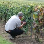 Test de maturité pour le pinot noir de Villedommange en Champagne