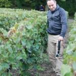 Nos reporters dans les vignes de Villedommange en Champagne