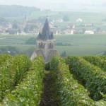 Vignoble de Villedommange en Montagne de Reims