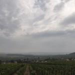 Vignoble de Villedommange dans la Montagne de Reims