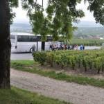Pique-nique dans les vignes à Villedommange - Montagne de Reims