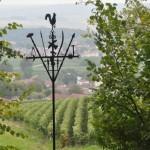 Vignes à Villedommange en Montagne de Reims