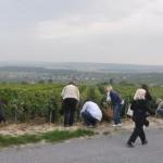 Etude de sol à Villedommange dans la Montagne de Reims
