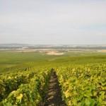 Vignes classées en Grand Cru du village de Verzenay