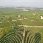 Vue sur les vignes de Verzenay et la plaine de Champagne depuis le sommet du phare