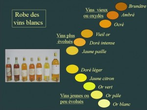 Couleurs vins blancs