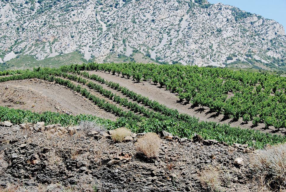 terroir schisteux de la vallée de l'agly