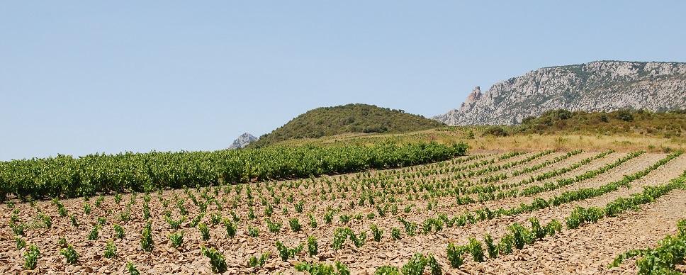 vignoble de maury - chateau de queribus