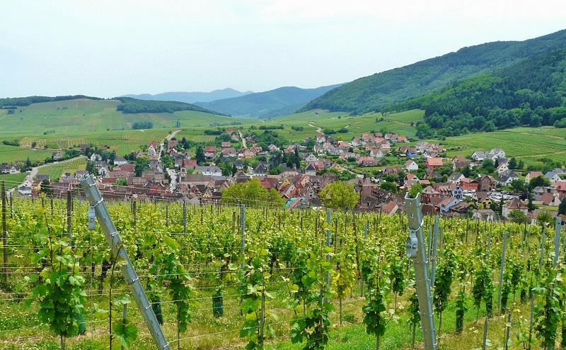 Grand Cru Schoenenbourg et Riquewihr