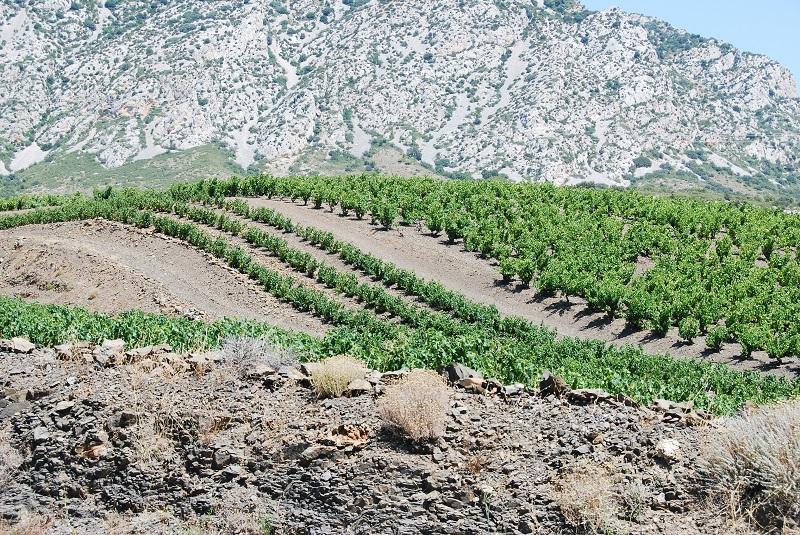 Vignobles de Maury - Vallée de l'Agly