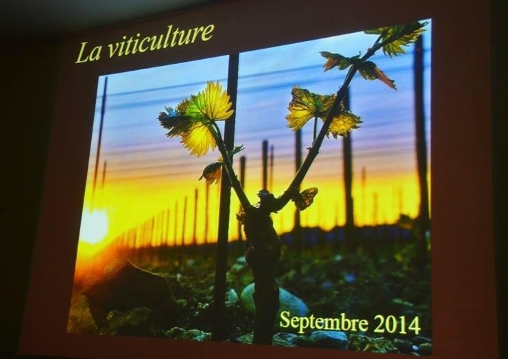 Présentation Visuelle - La Viticulture