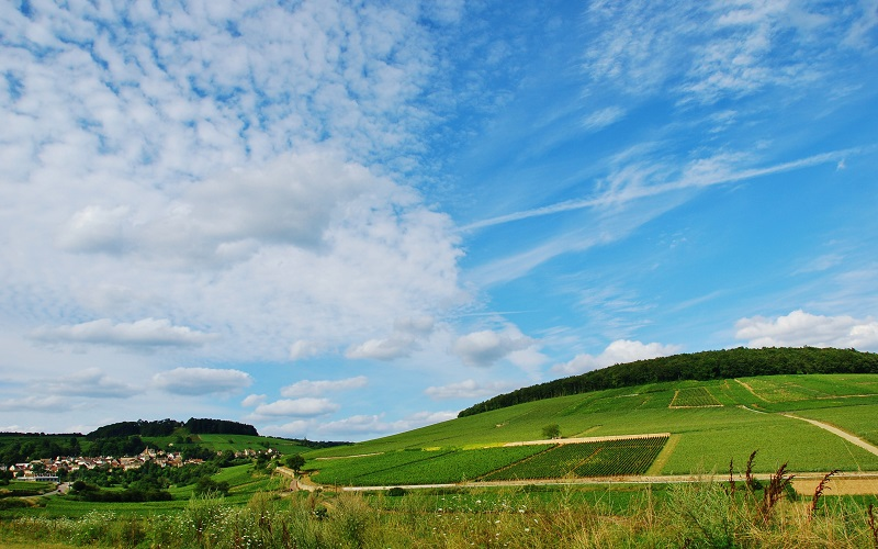 montagne de corton - bourgogne