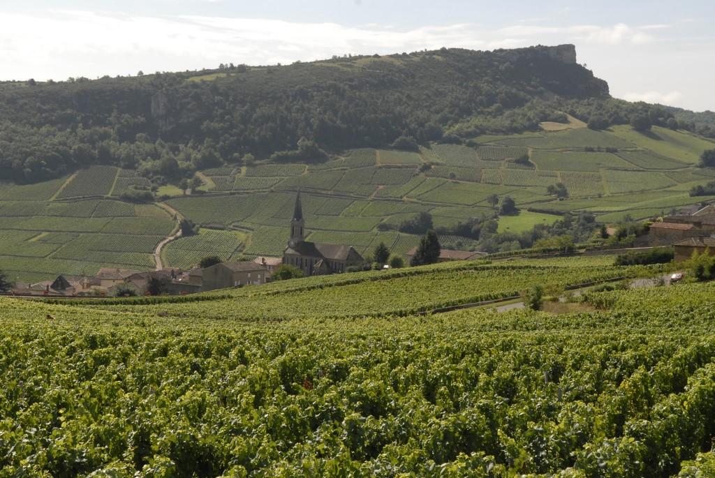Vignoble du Mâconnais autour de la roche de Solutré