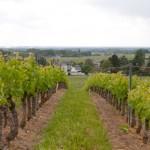 Vignes du Mont Sigou - Ingrandes de Touraine - Bourgueil