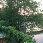Coucher de soleil sur la Vienne depuis la terrasse de l'Auberge de l'Ile à l'Ile Bouchard